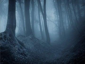 fantasy digital art - add forest
