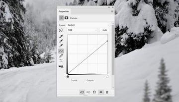 photo manipulation - trees 1 curves