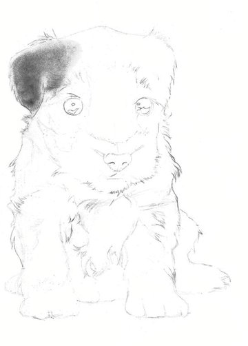 Begin laying down a base layer of graphite powder on the puppys ear