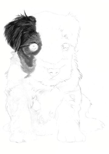 Work into this layer using 4B 5B or 6B pencils using an overlaying technique