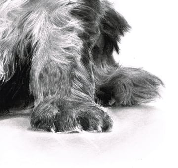 Erase areas of tone to give the impression of reflections of the puppys claws on the floor