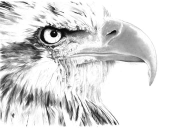 For detailed erasures on the eagles beak Pay close attention to your reference and use a lot of care