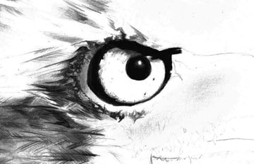 Again much care is needed when rendereing fine details in the eagles iris and around the edges of the eye