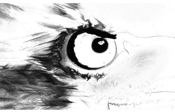 Since the eagles iris tone is fairly neutral we shall start work immediately on the outside of the eye