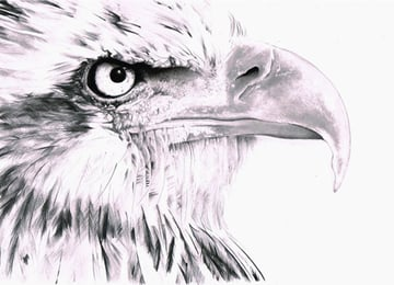 Our completed eagle Now only the background remains