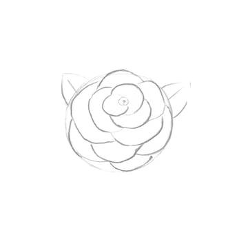 Flower - shape of petals