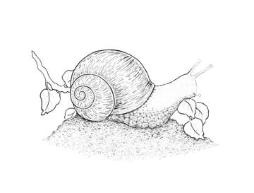 Dotwork on the snails body
