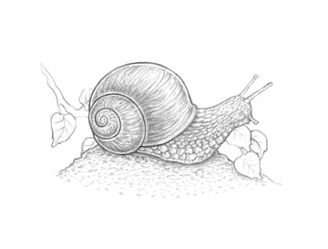 Creating the pattern on the snails body