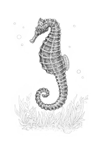 Working on the seahorses head