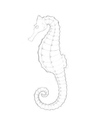 Creating the refined contour of the seahorse