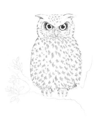 Drawing the eyes of the owl