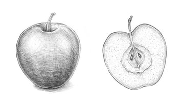 How to Draw an Apple Tutorial