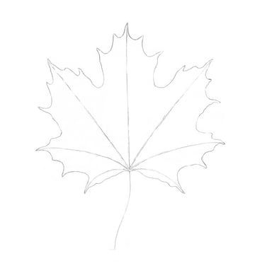 The shape of the maple leaf
