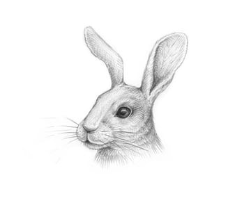 Completing the rabbits head