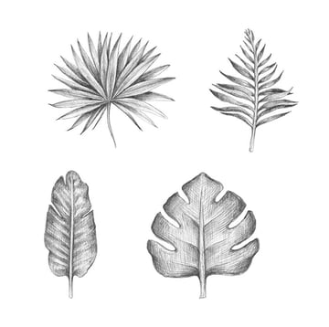 Several variants of a palm tree leaf