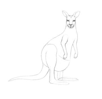 Working on the legs of the kangaroo