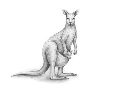 Completing the drawing of the kangaroo