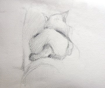 Pencil drawing of a cat