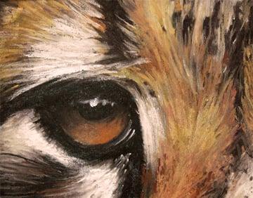 Cheetah Eye and Fur