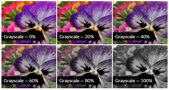 CSS Grayscale Filter Effect