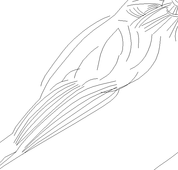 wing outline