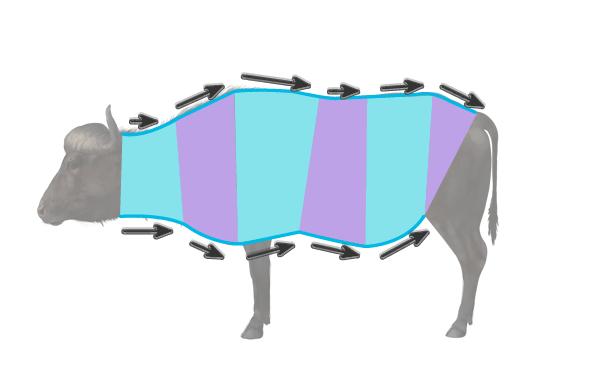 cape buffalo body