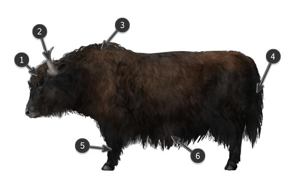 how to draw yak