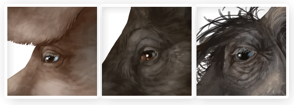 pig wild boar warthog eyes difference