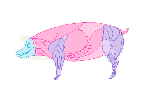 pig muscles