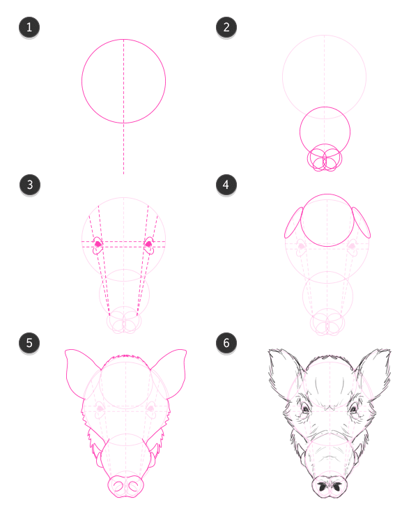 how to draw wild boar front