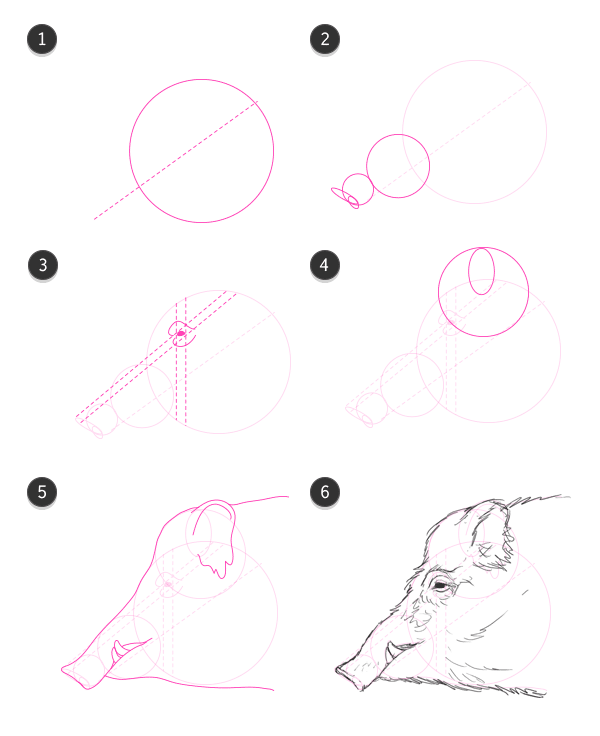 how to draw wild boar head side profile