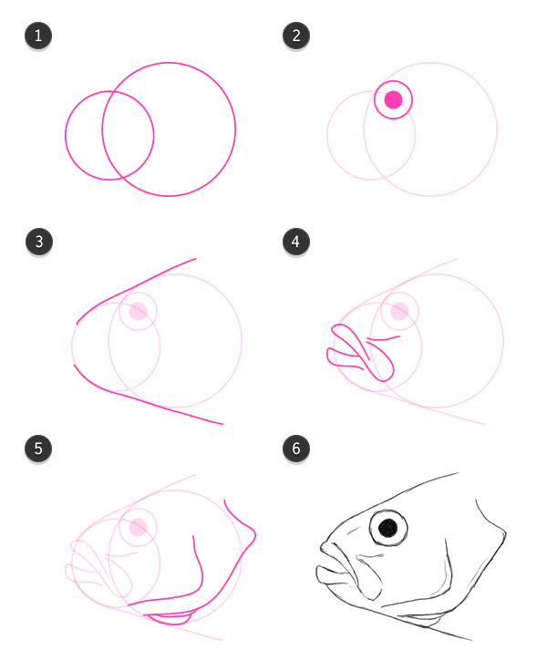 how to draw fish head