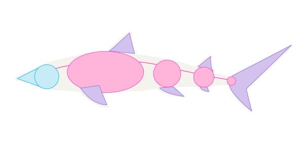 shark body shape
