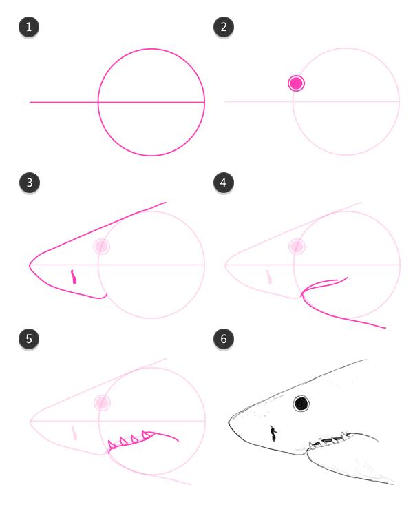 how to draw shark head