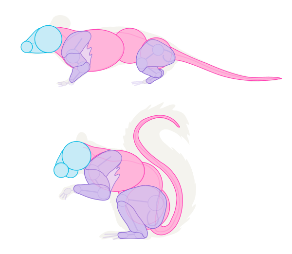 small rodents muscles mouse