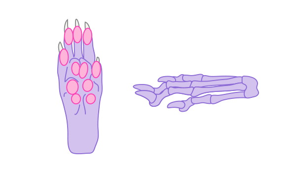 rodent feet how to draw