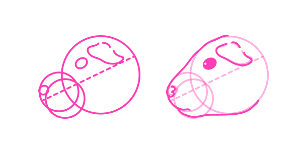 rodents how to draw guinea pig colors