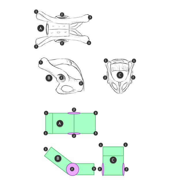 how to draw animal hiops pelvis in perspective