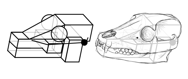how to draw animal skull in perspective 11
