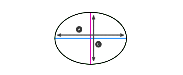 perspective how to draw ellipsoid torso capsule barrel