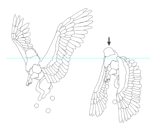 animation animal griffin flight flying wings draw photoshop body 7