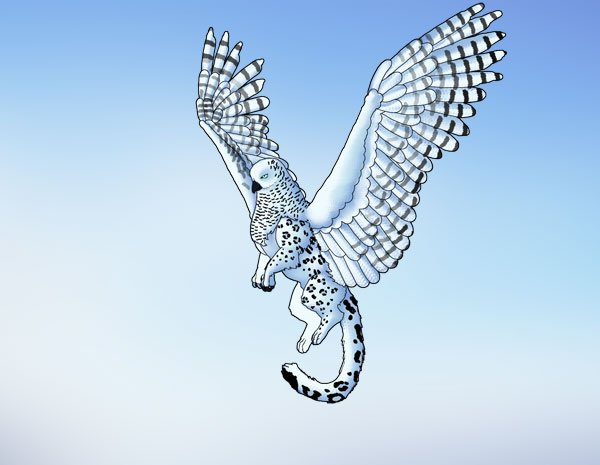 animation animal griffin flight flying wings draw photoshop final 5