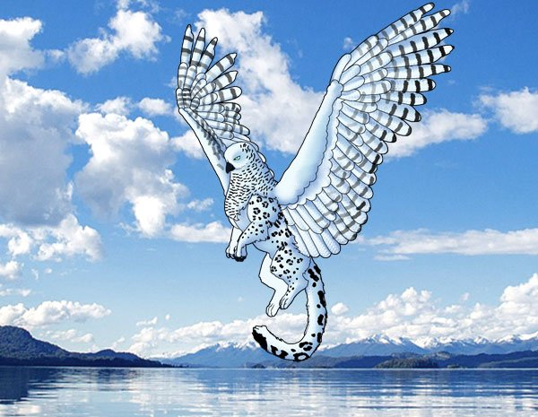 animation animal griffin flight flying wings draw photoshop final 4