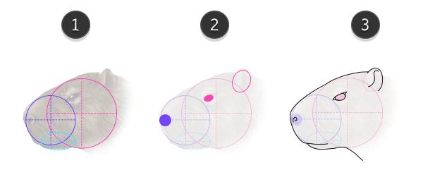how to draw capybara head