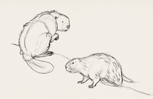 how to draw big rodents exercise 3