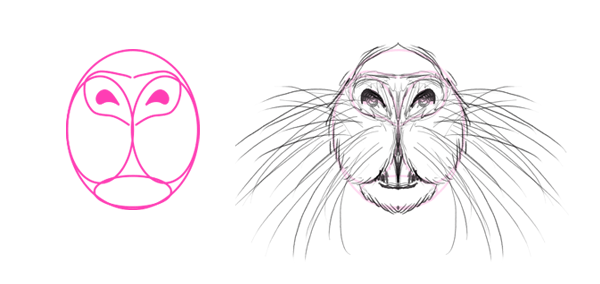 how to draw nutria snout nose whiskers teeth