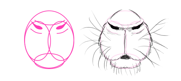 how to draw porcupine african crested nose mouth
