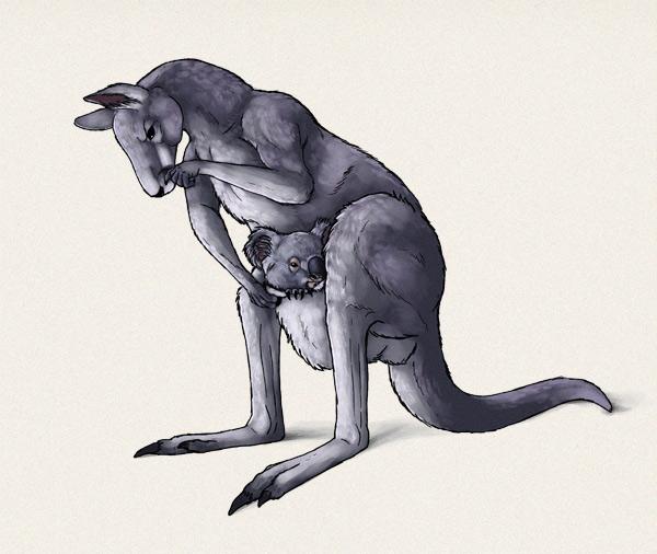 kangaroo illustration final