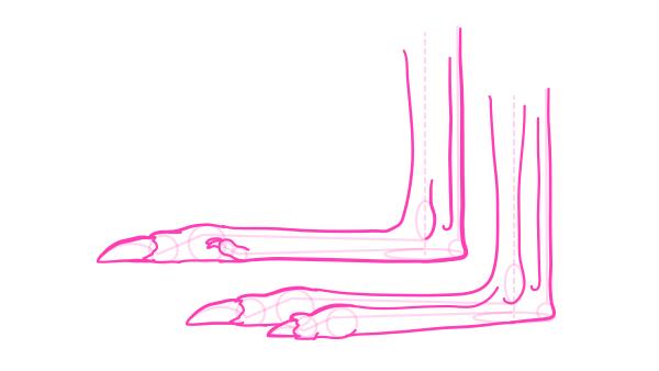 kangaroo how to draw feet paws hands 6