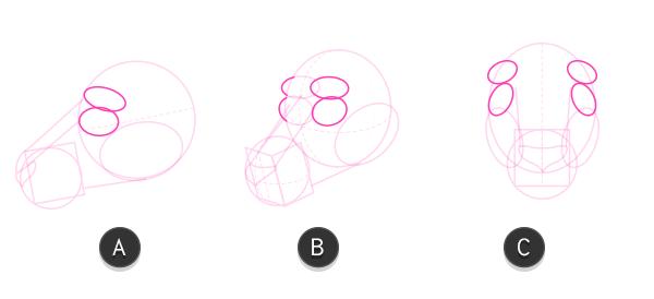 kangaroo how to draw head 6